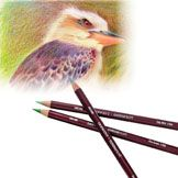 Derwent Coloursoft Colouring Pencils